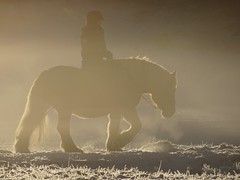 Morning mist (Horse in fog) (crush777roxx) Tags: park morning horse mist snow ice nature girl misty fog frozen december sweden stockholm sony foggy riding sverige crush djurgarden gärdet 28th djurgården gardet 2015 sooc straightoutofcamera 20151228 hx90v sonyhx90v crush777roxx