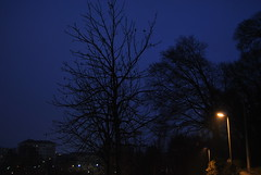 DSC_0222 (lorenzo.monti1988) Tags: foglie alberi torino nikon strada lampioni sera senza d3000
