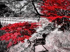 Shashin - DSCN2822 (Mathieu Perron) Tags: life city bridge people bw white black monochrome japan nikon noir perron daily nb journey  mp blanc japon personne ville gens vie mathieu   sjour   quotidienne      p520  zheld