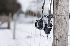 HFF! (CarolienCadoni..) Tags: camera winter snow netherlands fence photography dof pentax january nederland groningen 50mmf14 stadskanaal sal50f14 pagedal happyfencefriday sonyslta99