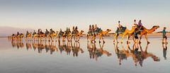 IMG_8167 (troysinclair893) Tags: sunset camels