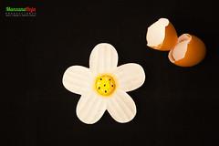 egg (ManzanaRoja producciones) Tags: food white black art blanco colors yellow fun break egg humor amarillo huevo gastronoma