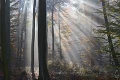 DSC_8683 ein märchenhafter Traum... - a fairy-tale dream... (baerli08ww) Tags: autumn mist forest germany deutschland nikon nebel herbst natur autumncolors wald morningsun rheinlandpfalz morgensonne westerwald herbstfarben rhinelandpalatinate westerforest