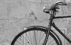 Old bike (MassiVerdu) Tags: street old travel urban blackandwhite bw italy bike bicycle wall vintage blackwhite ancient italia explorer transport streetphotography bn cycle bici streetphoto exploration puglia biancoenero ruota blackandwhitephotography ciclo bicicletta urbanphotography urbex urbanphoto oldbike ostuni nikond3200 blackandwhitephoto travelphotography travelphoto travelpicture explored d3200