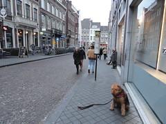 2016-0117 (schuttermajoor) Tags: maastricht nederland hond che 2016 airedaleterrier ommetjenederland