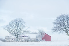 Winter scenery (Infomastern) Tags: winter sky landscape three vinter scenery frost himmel rime trd landskap rimfrost