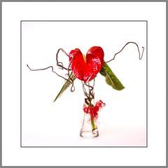 Freitag ist Blumentag (Friday - Flowerday) (alfred.hausberger) Tags: rot stilleben blte freitagistblumentag fridayflowerday