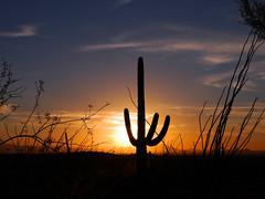 Saguaro National Park-Sonoran Sunset (29) (moelynphotos) Tags: sunset arizona cactus silhouette nationalpark desert tucson saguaro saguaronationalpark sonorandesert desertlandscape desertscenery moelynphotos