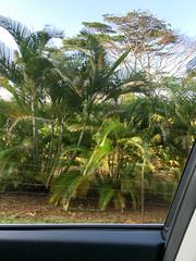 IMG_1628 (TruffShuff) Tags: 2016 hi hawaii kauai wailuariverstatepark january2016