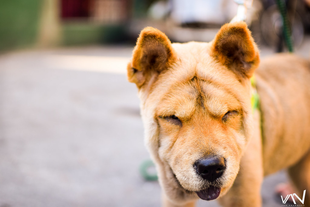 The Worlds Best Photos Of Haircut And Trimmed Flickr Hive Mind
