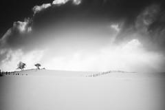Sur les hauteurs de Chastreix II (steph20_2) Tags: bw white black tree monochrome montagne lumix countryside noir noiretblanc ngc central panasonic neige 20mm monochrom paysage arbre blanc moutain sancy massif clôture m43 gh3 chastreix skanchelli