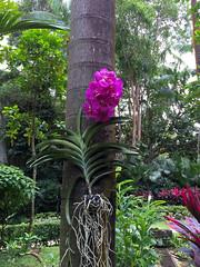 Img507120nx2 (veryamateurish) Tags: singapore shangrilahotel iphone6