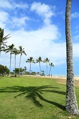 03032016_008_ (ALOHA de HAWAII) Tags: hawaii oahu kualoaregionalpark palmtreeshilphoette
