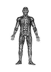Anatomy (just an art person) Tags: man colour art muscles illustration pen ink dark design blackwhite russia body muscle grunge creepy medical inkdrawing humanbody inkart anatomical fineliner dasvidaniya anatarctica medicaldrawing operationvostok mysteryatlakevostok