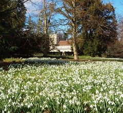 2016_02_0463 (petermit2) Tags: heritage church gardens garden yorkshire snowdrops snowdrop doncaster southyorkshire englishheritage brodsworth brodsworthhall