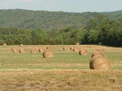 Fields of Hay (jb5860) Tags: artisticphotos bestartistic jb5860