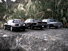 Lincoln Town Car Generations 1:43 Scale Models (PaulBusuego) Tags: 2003 road door new york city nyc usa black ford scale car wheel sedan silver toy drive town miniature us model mercury body signature 4 rear 1996 models platform cartier continental grand victoria x cadillac mob plastic replica domestic american modular frame lincoln vehicle 1997 crown neo 1995 resin collectible collectables windshield 50 1986 limited edition executive saloon panther luxury premium limousine v8 mafia 46 marquis limousines fullsize 143 luxurious diecast rwd ixo 2011