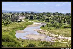 Tarangire 2016 01 (Havaux Photo) Tags: elephant robert rio river tanzania photo lion ostrich leon zebra antelope avestruz giraffe gazelle elefant antilope tarangire elefante riu gacela cebra estru jirafa lleo tarangirenationalpark antilop gasela havaux