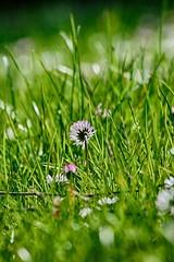 Spring (joaobambu) Tags: