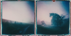 Mystic Morning (ltpaperhouse) Tags: color film polaroid diptych 600 instantphotography polaroidweek theimpossibleproject instantlab ltpaperhouse