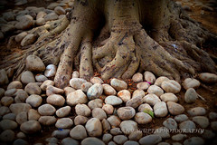 pebbles stone........... (sanyagupta09) Tags: travel tree nature photography niceshot outdoor stones exploring photooftheday naturephotography naturelover capturing travelphotography travelphotographer randomclick