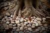 pebbles stone........... (sanyagupta09) Tags: travel tree nature photography niceshot outdoor stones exploring photooftheday naturephotography naturelover capturing travelphotography travelphotographer randomclick