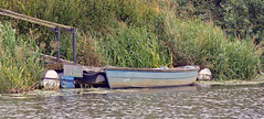 Along the river bank (Salopian07) Tags: water river reeds boat jetty mooring riverbank riveravon rowingboat