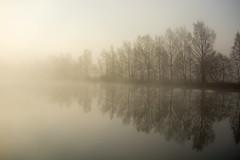 misty trees (ossi.paajanen) Tags: landscape maisema sumu