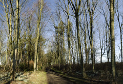 elie house woods (stusmith_uk) Tags: landscape march scotland fife elie 2016 eastneuk eliehouse