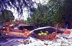 apples (haidarism (Ahmed Alhaidari)) Tags: food tree tourism nature fruit turkey garden bokeh farm tourist apples bykada