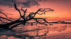 Jekyll Island Sunset (FotoByOliver) Tags: ocean morning travel sunset shadow sea usa tree beach nature water silhouette sunrise georgia island evening nikon united driftwood sonnenaufgang jekyll staates d7100