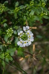 DSC_6789 (Dain Schlegel) Tags: flowers white tiny greens abundance mulch luscious