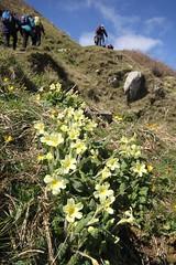 Briallu (Rory Francis) Tags: coast mon coastalpath ynysmon arfordir cemaes sirfon cymdeithasedwardllwyd llwybrarfordircymru
