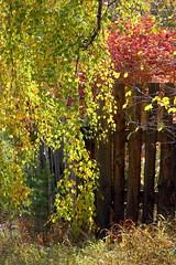 DSC_6034 (Rustam Bikbov) Tags: autumn september 2012    sverdlovskoblast