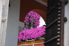 Siviglia 2016 (Gian Luca Gobbi) Tags: city sevilla spain siviglia