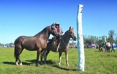 El lobuno (Eduardo Amorim) Tags: horses horse southamerica argentina caballo cheval caballos cavalos corrientes pferde cavalli cavallo cavalo gauchos pferd chevaux gaucho amricadosul gacho amriquedusud  gachos  sudamrica suramrica amricadelsur sdamerika jineteada  americadelsud gineteada americameridionale eduardoamorim curuzcuati provinciadecorrientes corrientesprovince cavall