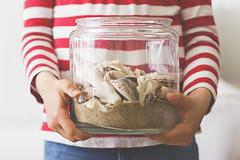 Recuerdos de viajes (Ines L. Pisano) Tags: summer shells rayas seashells stripes playa verano summertime recuerdos conchas marinera