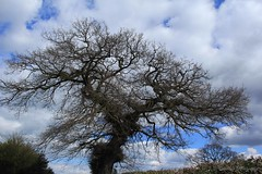 Posing (cattan2011) Tags: england branch shape lichfield