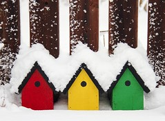 Fluffy Snow (Karen_Chappell) Tags: red white snow green yellow newfoundland three spring birdhouse colourful nfld
