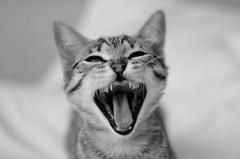 gRitaaa!! (JNacher) Tags: blackandwhite blancoynegro animals cat 35mm gato animales 35mm18