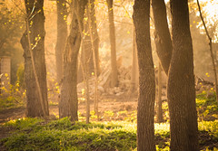 Magic forest (Vlad S. Ionita) Tags: new wood light shadow sky sun tree green nature beautiful up lines weather leather animals yellow forest spectacular gold spring ray skies shine natural wind cloudy magic sunny tint shades beam clear rays dimension leafs distant supernatural