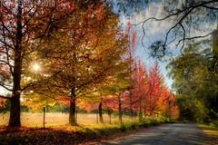 IMG_6030_1_2_tonemapped (newbs216) Tags: autumn trees landscape hdr mtwilson