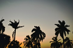 Palms (David Avila Photography) Tags: world santa sky nature colors america palms photography coast movement nikon colombia shadows south ombre marta fade balance d3100