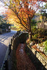 20151219-DSC_4756.jpg (d3_plus) Tags: street autumn autumnfoliage sky fall nature japan nikon scenery shrine kamakura daily autumnleaves 日本 streetphoto 28105mmf3545d 紅葉 nikkor 秋 自然 神社 寺 空 dailyphoto touring 風景 thesedays 鎌倉 神奈川 28105 景色 28105mm 日常 路上 holyplace ツーリング 古都 zoomlense 広角 ancientcapital ストリート ニコン ズーム 聖地 28105mmf3545 d700 281053545 kanagawapref nikond700 aiafzoomnikkor28105mmf3545d 路上写真 28105mmf3545af aiafnikkor28105mmf3545d