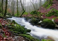 Birnam Glen and the Inchewan Burn (eric robb niven) Tags: nature river walking scotland waterfall dundee perthshire glen dunkeld birnam ericrobbniven