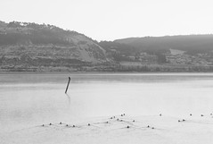 Overlook at sea (Dyniath) Tags: ocean wood winter sea blackandwhite cold reflection bird water monochrome swimming lumix log frost bright relaxing ducks sunny steam panasonic chilling moutain moutains