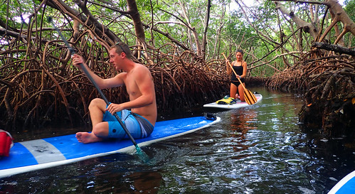 12_31_15  paddleboard kayak tour Lido Key 07