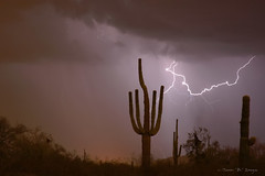 Saguaro Southwest Desert Lightning Air Strike (Striking Photography by Bo Insogna) Tags: summer arizona cactus usa southwest art nature phoenix weather america landscapes seasons desert tucson monsoon scottsdale lightning saguaro storms mesa thunderstorms jamesinsogna