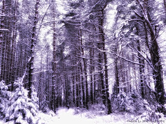 Snowy Tale (gráce) Tags: wood trees winter snow tree nature pine forest landscape frost outdoor pines alotofsnow snowywinter winterforest branchesinsnow snowyforest treesundersnow woodinsnow samsunggalaxys5