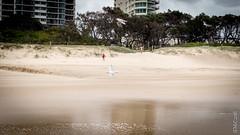 P1130967 (Pursuedbybear) Tags: seagulls beach sunshinecoast maroochydore silvergull chroicocephalusnovaehollandiae
